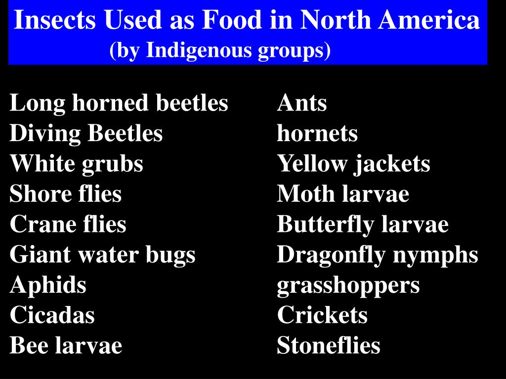 Insects Used as Food in North America