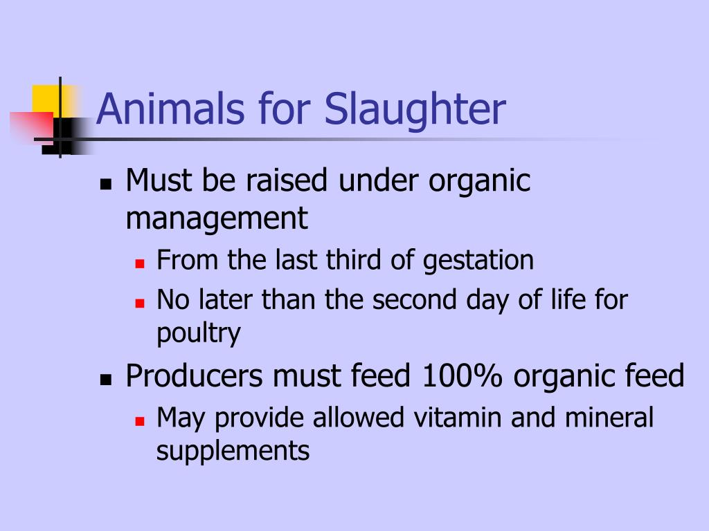 Animals for Slaughter