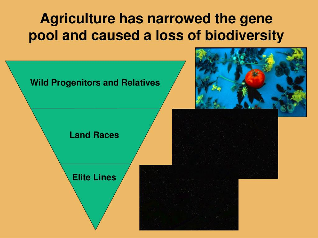 Agriculture has narrowed the gene pool and caused a loss of biodiversity