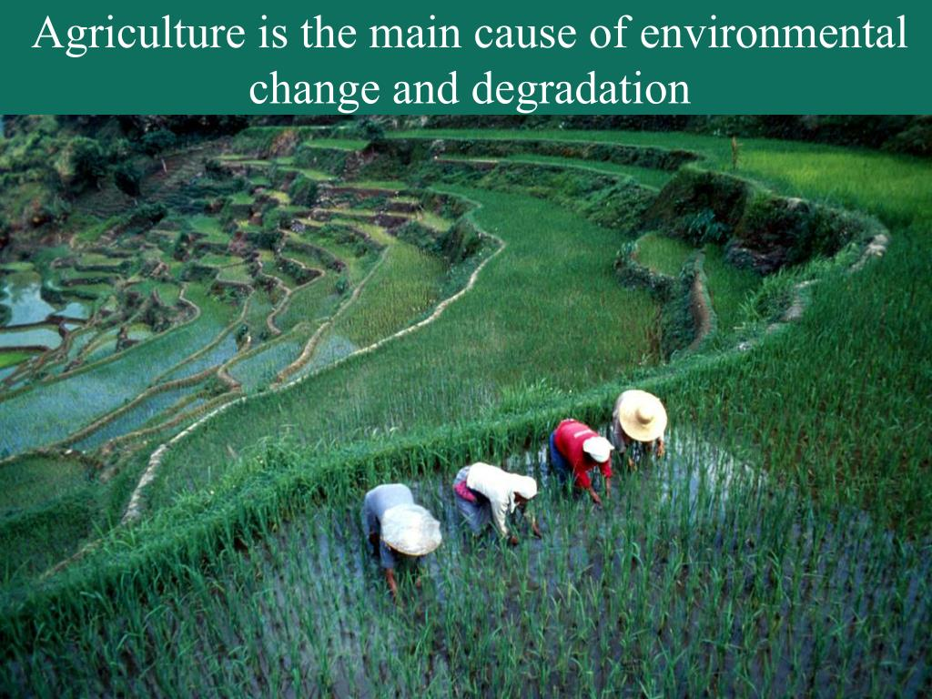 Agriculture is the main cause of environmental change and degradation