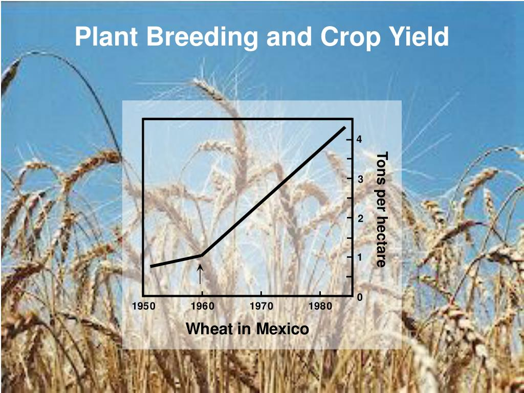 Plant Breeding and Crop Yield