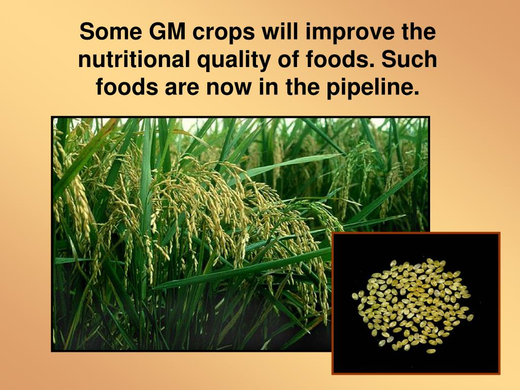 Some GM crops will improve the nutritional quality of foods. Such foods are now in the pipeline.