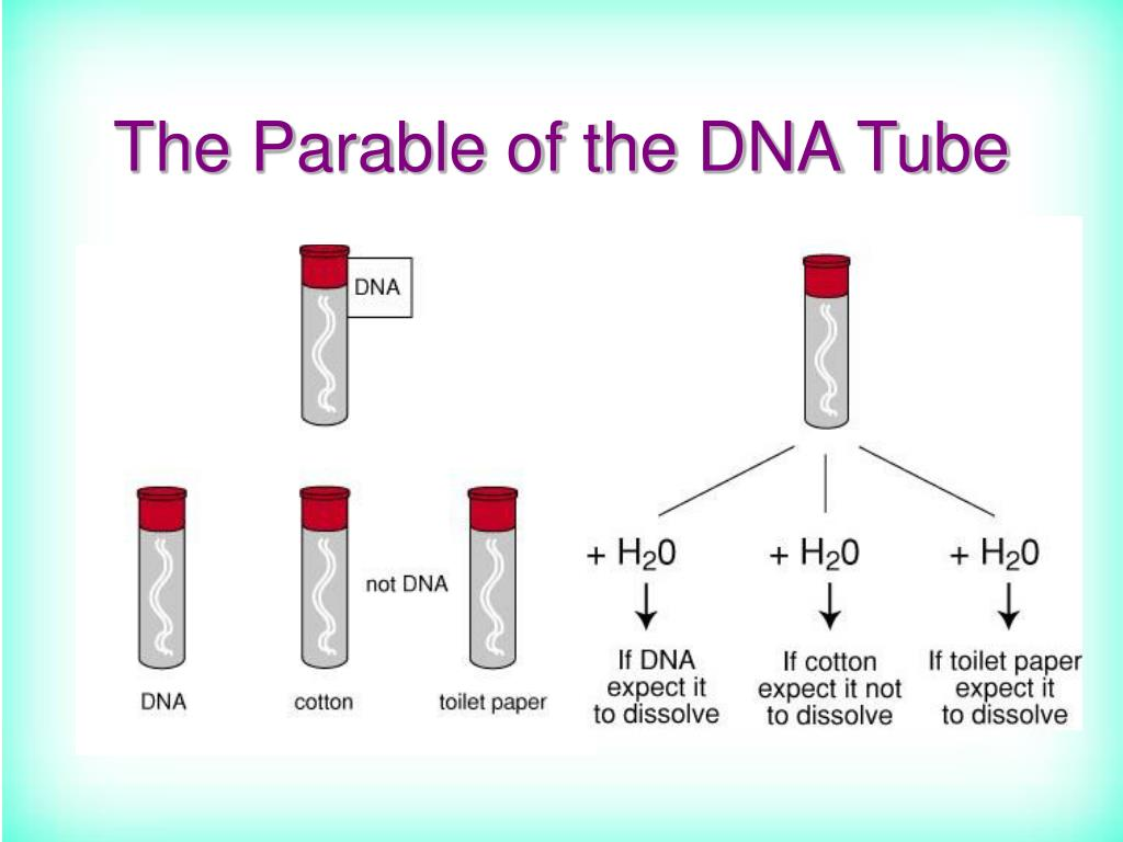 The Parable of the DNA Tube