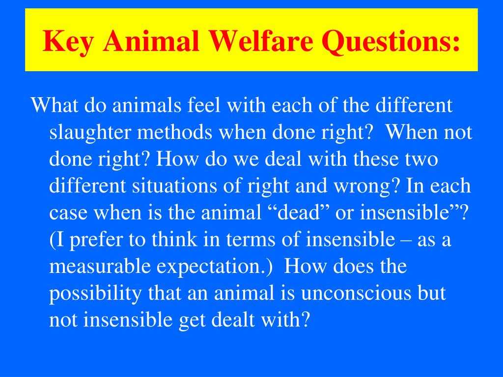 Key Animal Welfare Questions: