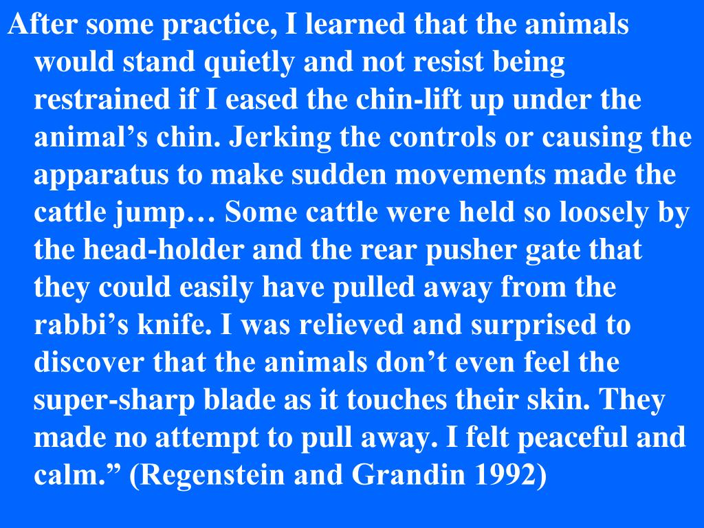 """After some practice, I learned that the animals would stand quietly and not resist being restrained if I eased the chin-lift up under the animal's chin. Jerking the controls or causing the apparatus to make sudden movements made the cattle jump… Some cattle were held so loosely by the head-holder and the rear pusher gate that they could easily have pulled away from the rabbi's knife. I was relieved and surprised to discover that the animals don't even feel the super-sharp blade as it touches their skin. They made no attempt to pull away. I felt peaceful and calm."""" (Regenstein and Grandin 1992)"""