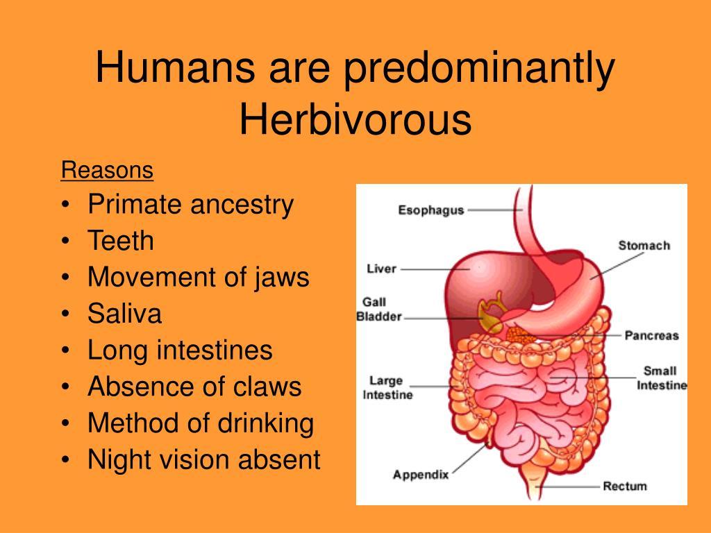 Humans are predominantly Herbivorous