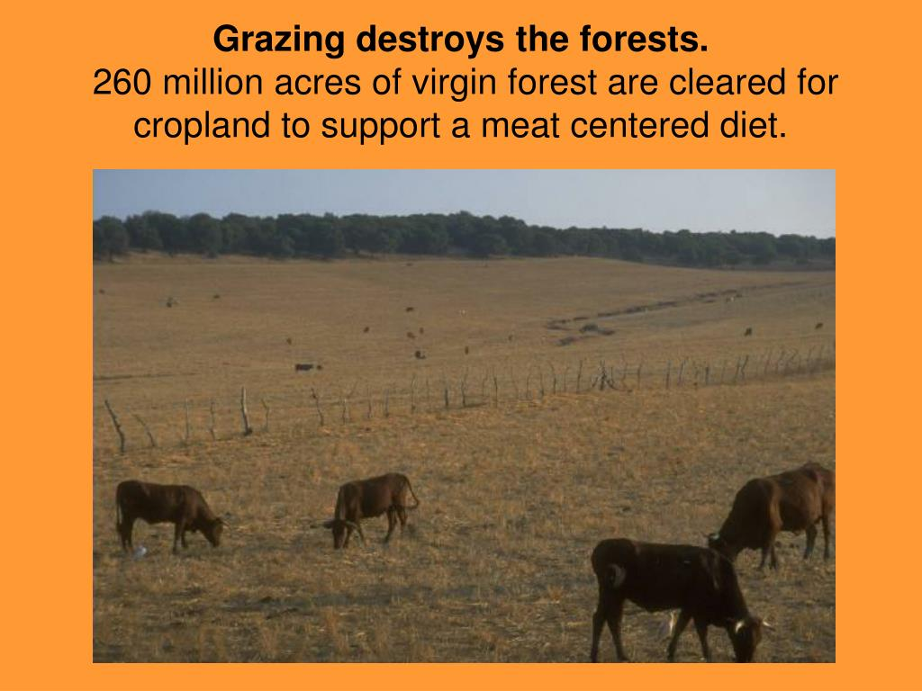 Grazing destroys the forests.