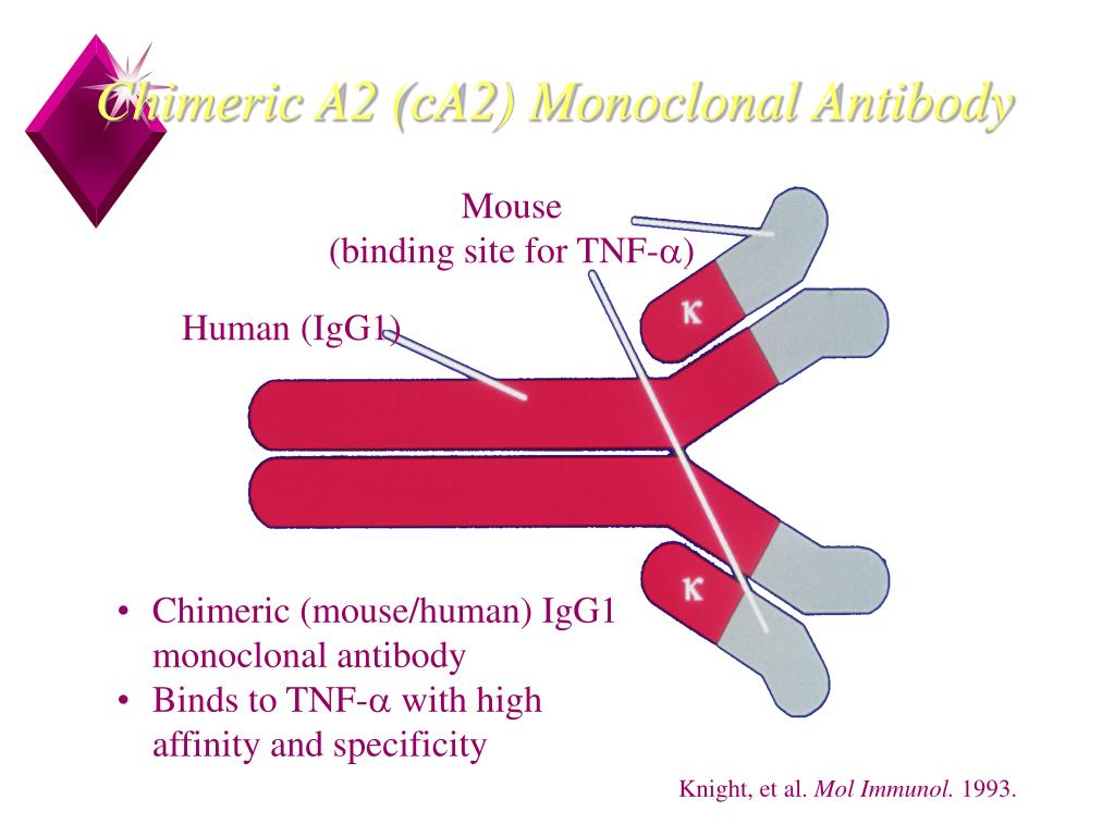 Chimeric A2 (cA2) Monoclonal Antibody