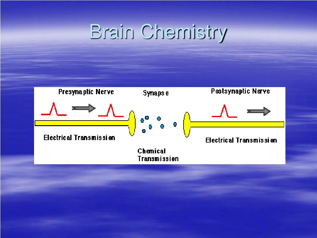 understanding brain chemistry essay The chemistry of thought t f collura december 10, 1999 this essay outlines some general issues and introduces some specific considerations relevant to the scientific understanding of the mind and brain it is intended to elevate critical issues with regard to the.