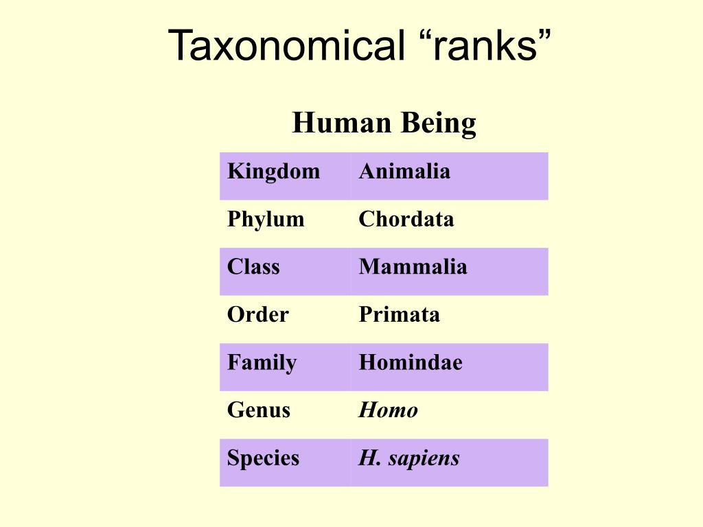 "Taxonomical ""ranks"""