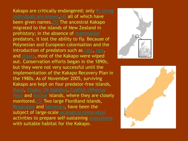 Kakapo are critically endangered; only