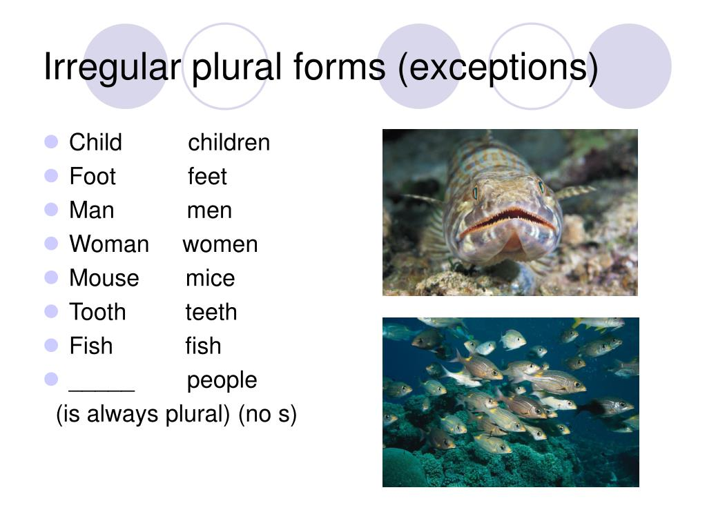 Irregular plural forms (exceptions)