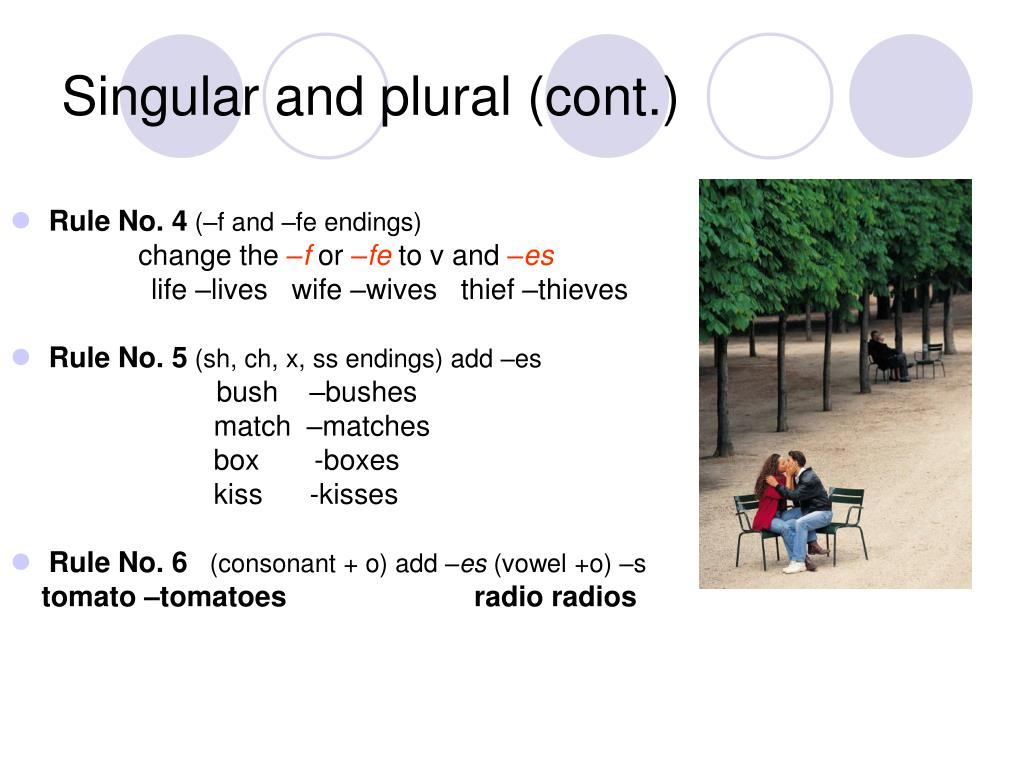Singular and plural (cont.)