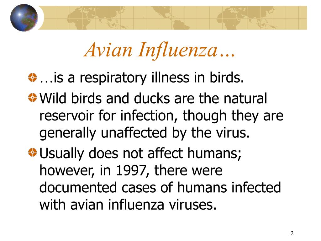 Avian Influenza…