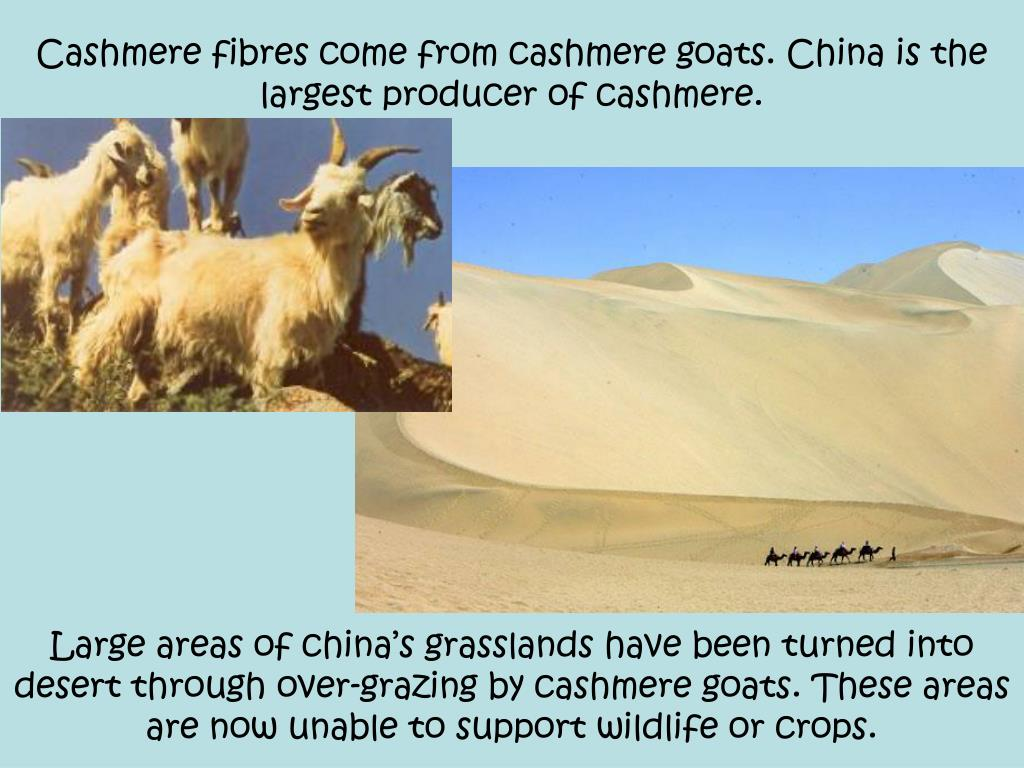 Cashmere fibres come from cashmere goats. China is the largest producer of cashmere.