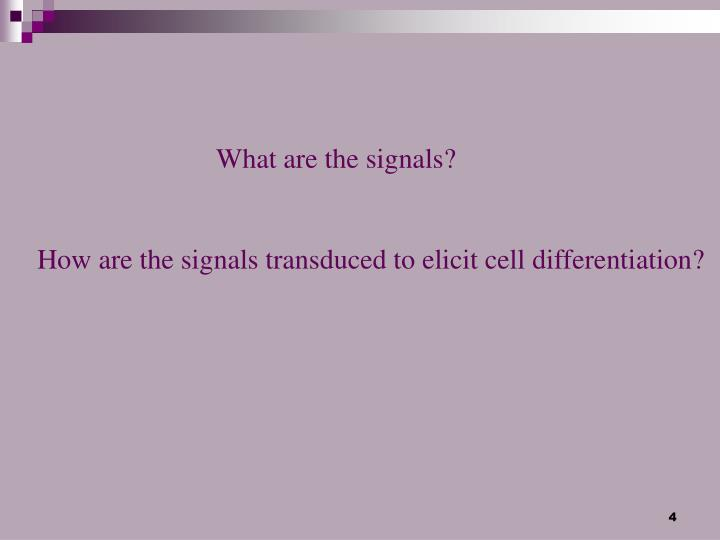 What are the signals?