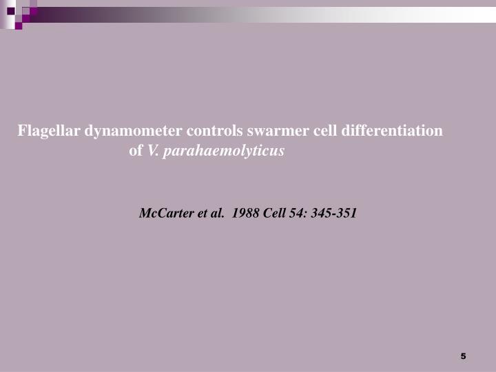 Flagellar dynamometer controls swarmer cell differentiation