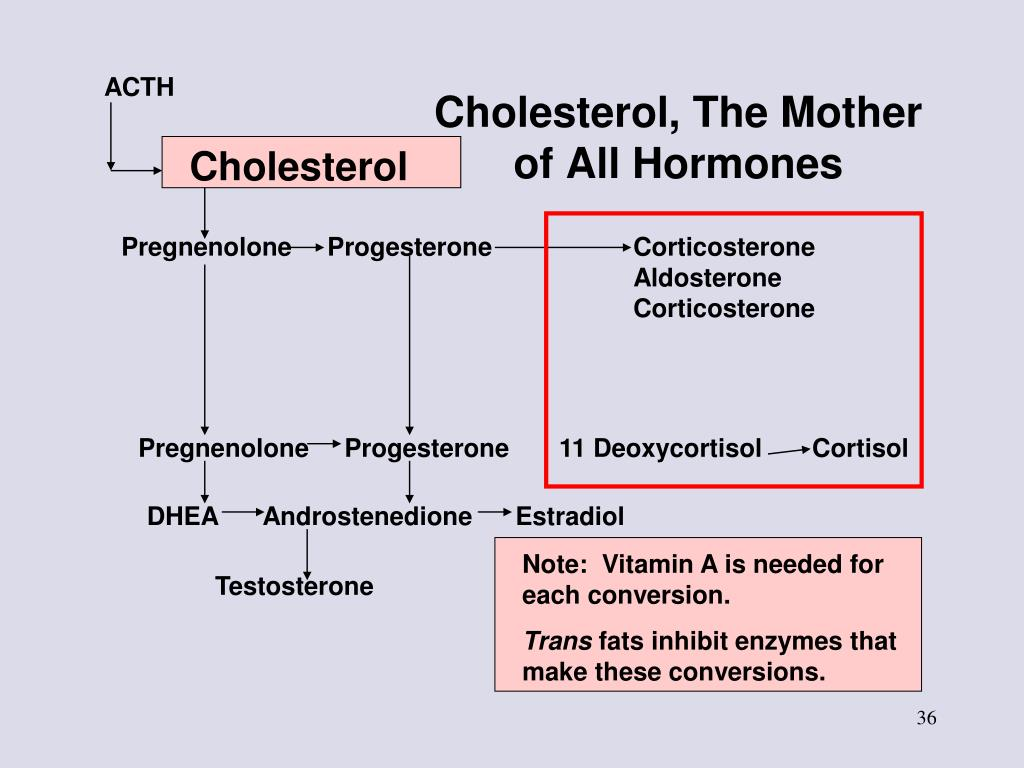 Cholesterol, The Mother