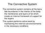 the connective system