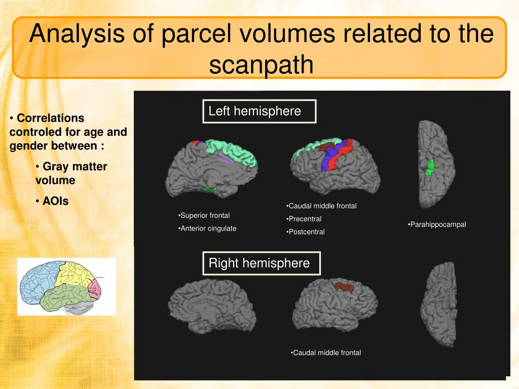 Analysis of parcel volumes related to the scanpath