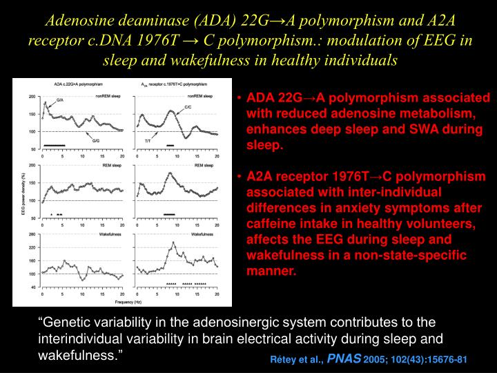 Adenosine deaminase (ADA) 22G→A polymorphism and A2A receptor c.DNA 1976T → C polymorphism.: modulation of EEG in sleep and wakefulness in healthy individuals