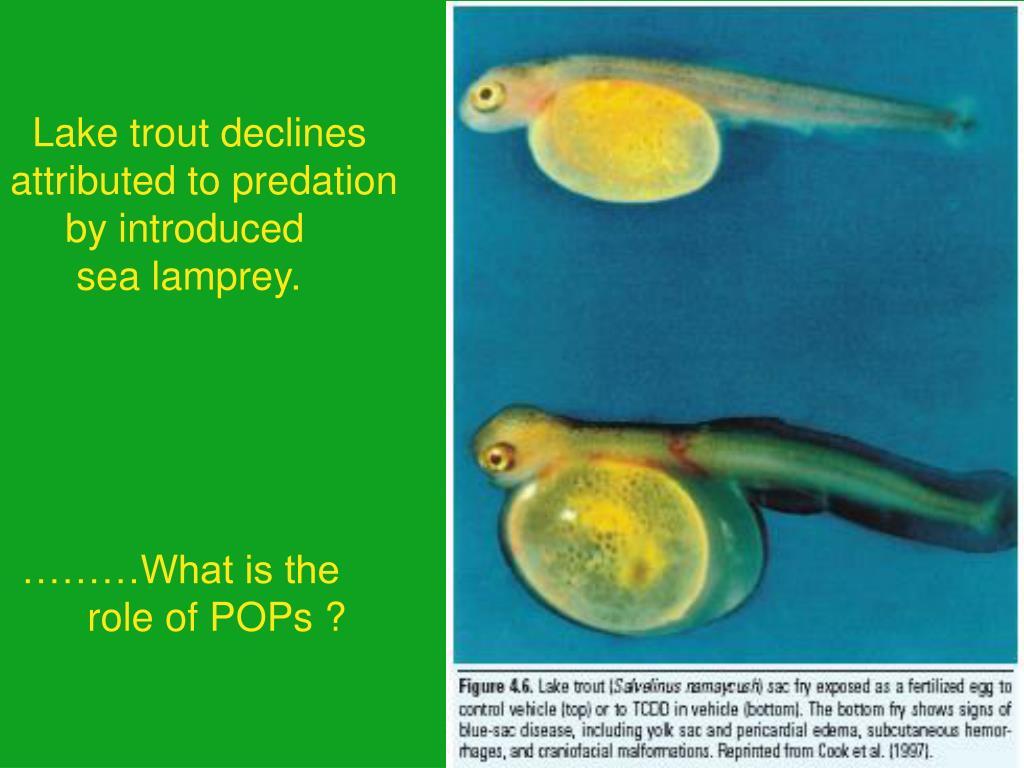 Lake trout declines