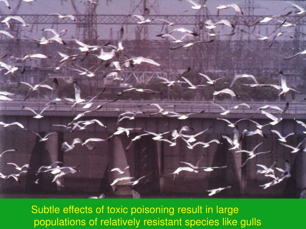 Subtle effects of toxic poisoning result in large
