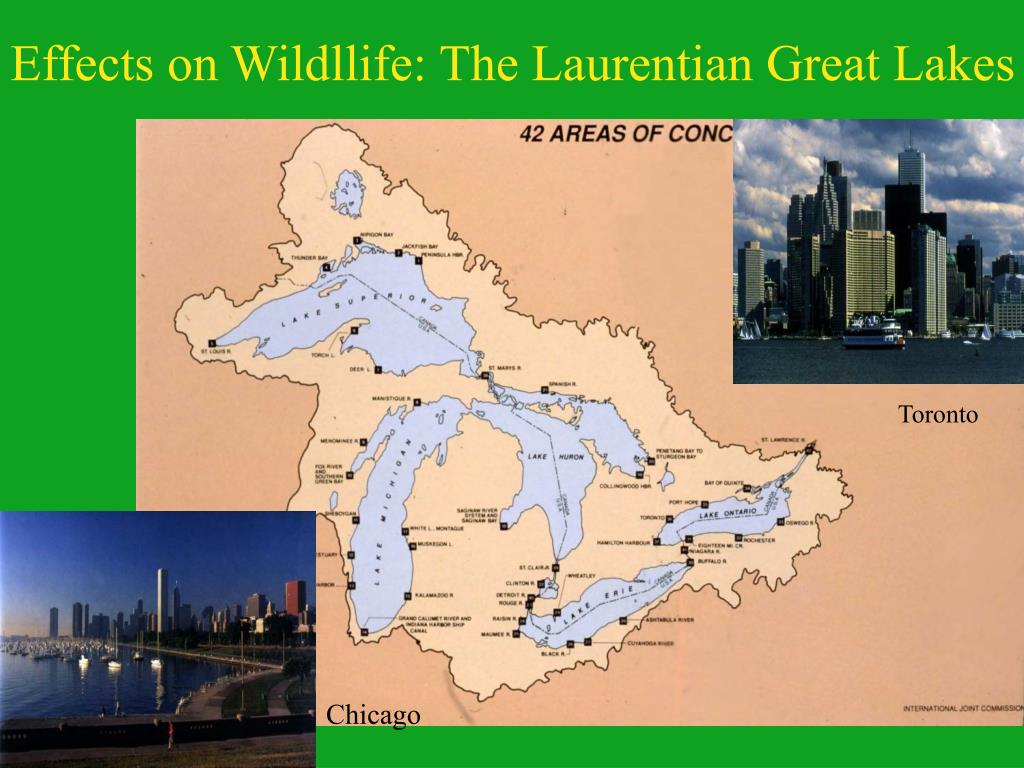 Effects on Wildllife: The Laurentian Great Lakes