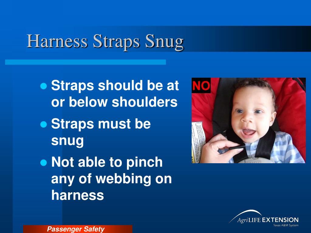 Harness Straps Snug