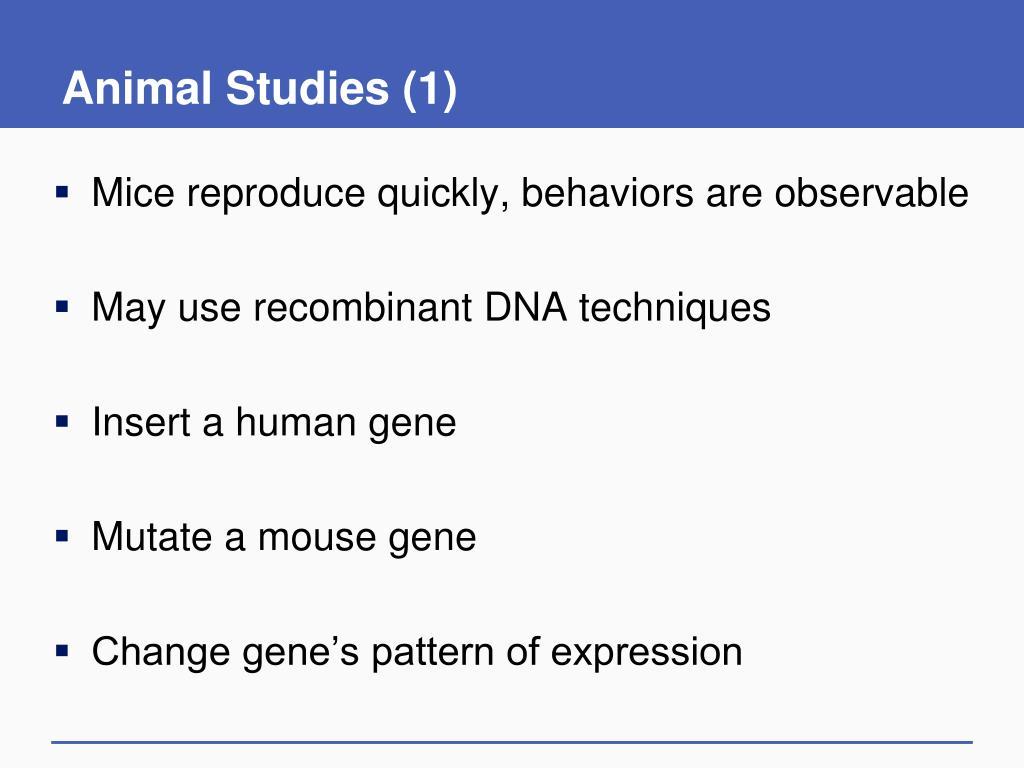 Animal Studies (1)