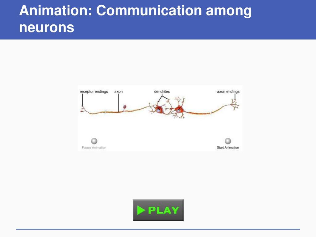 Animation: Communication among neurons