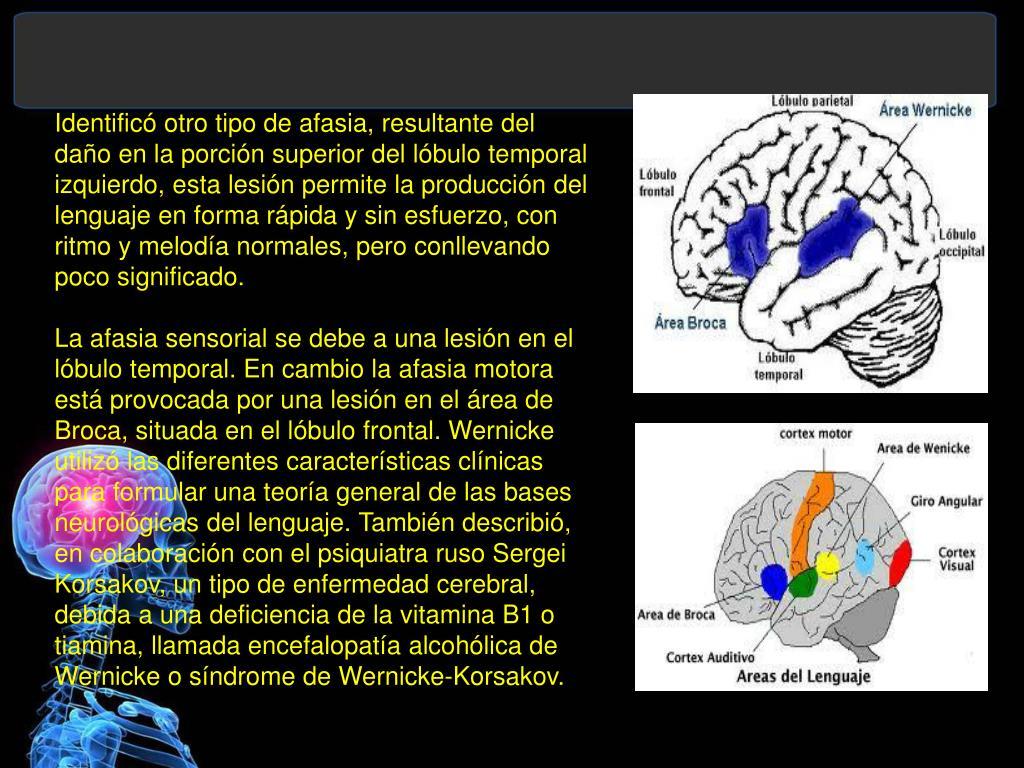 Identificó otro tipo de afasia, resultante del daño en la porción superior del lóbulo temporal izquierdo, esta lesión permite la producción del lenguaje en forma rápida y sin esfuerzo, con ritmo y melodía normales, pero conllevando poco significado.