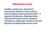 alternative yeast