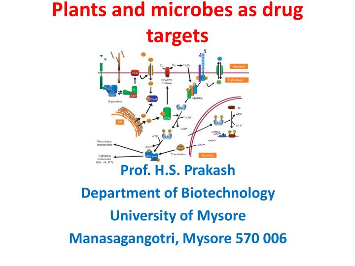 Plants and microbes as drug targets l.jpg