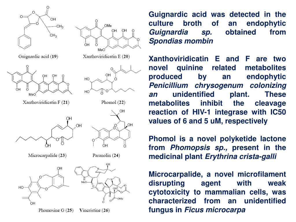 Guignardic acid was detected in the culture broth of an endophytic