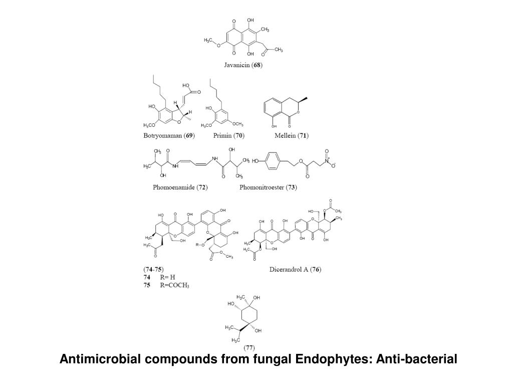 Antimicrobial compounds from fungal Endophytes: Anti-bacterial
