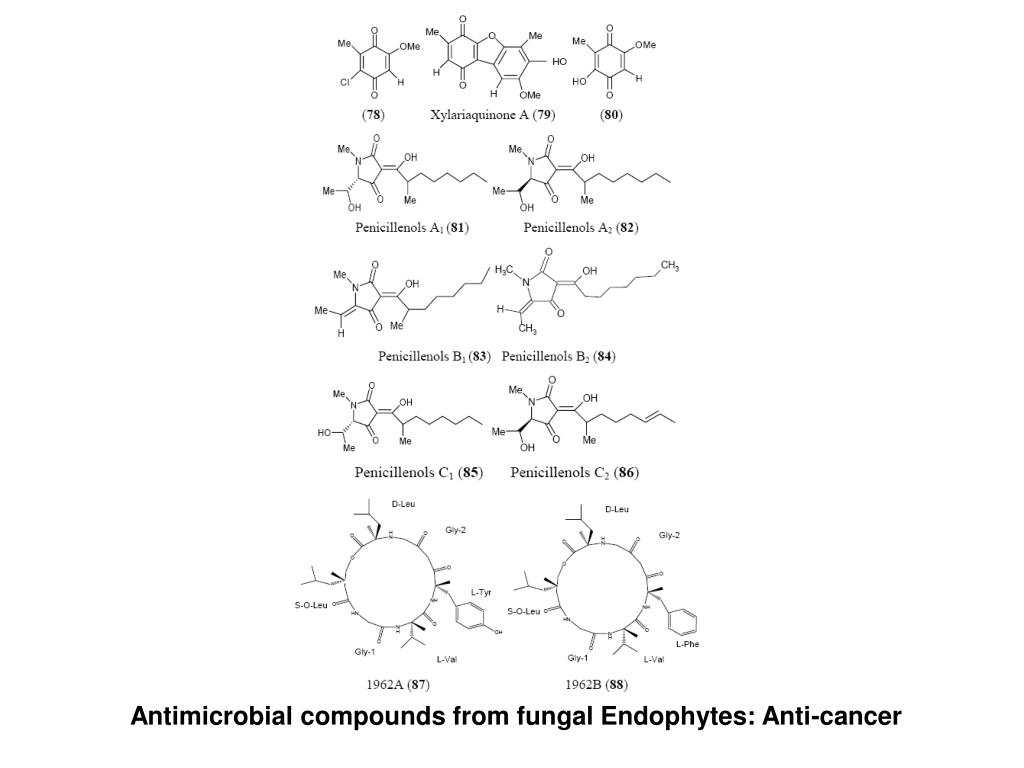 Antimicrobial compounds from fungal Endophytes: Anti-cancer