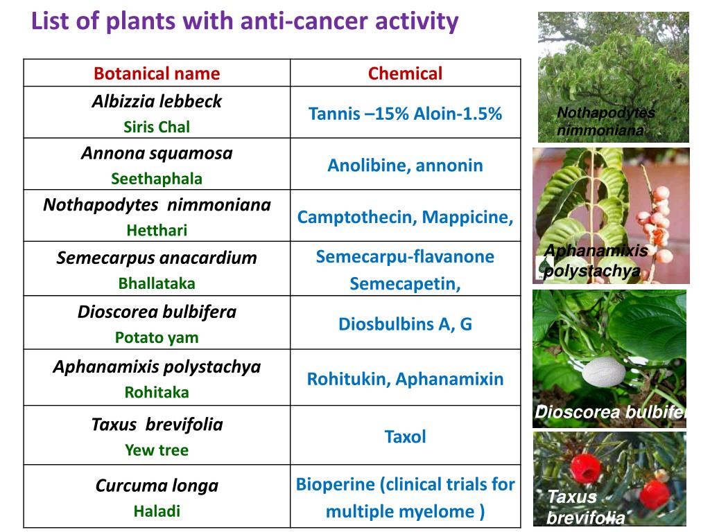 List of plants with anti-cancer activity
