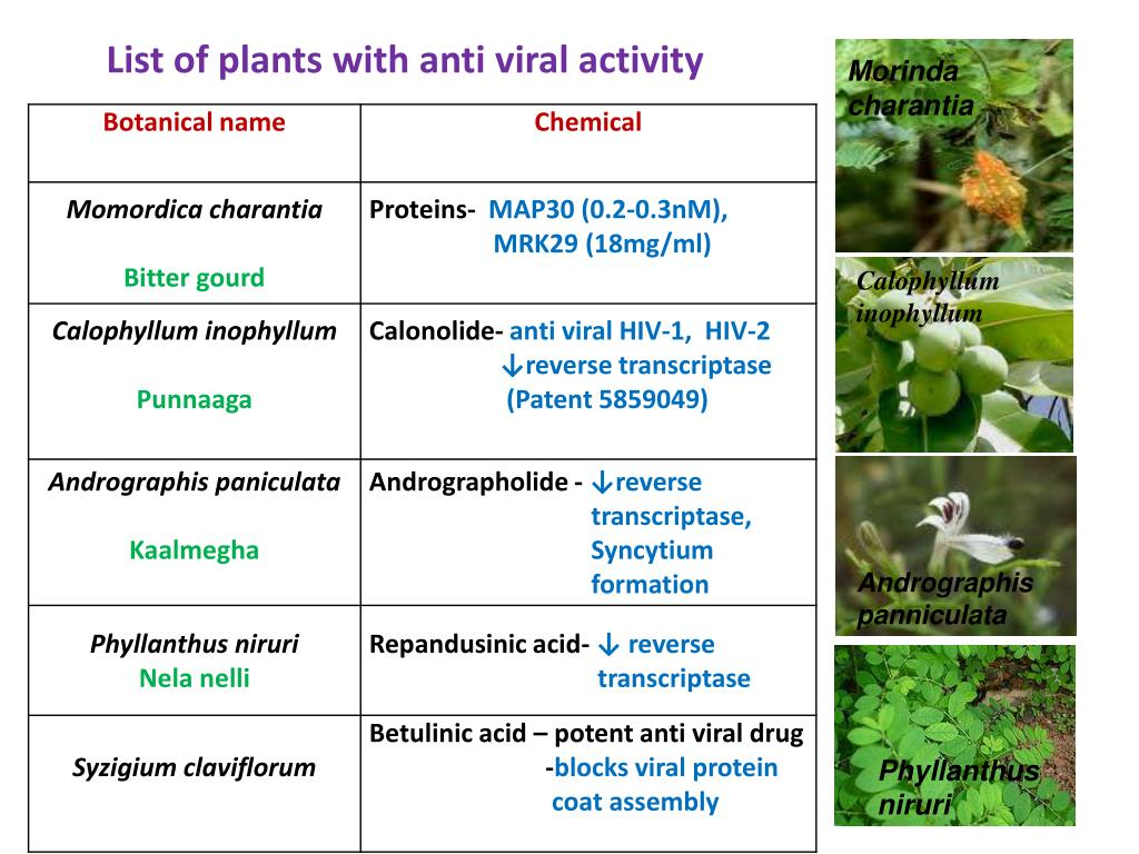 List of plants with anti viral activity