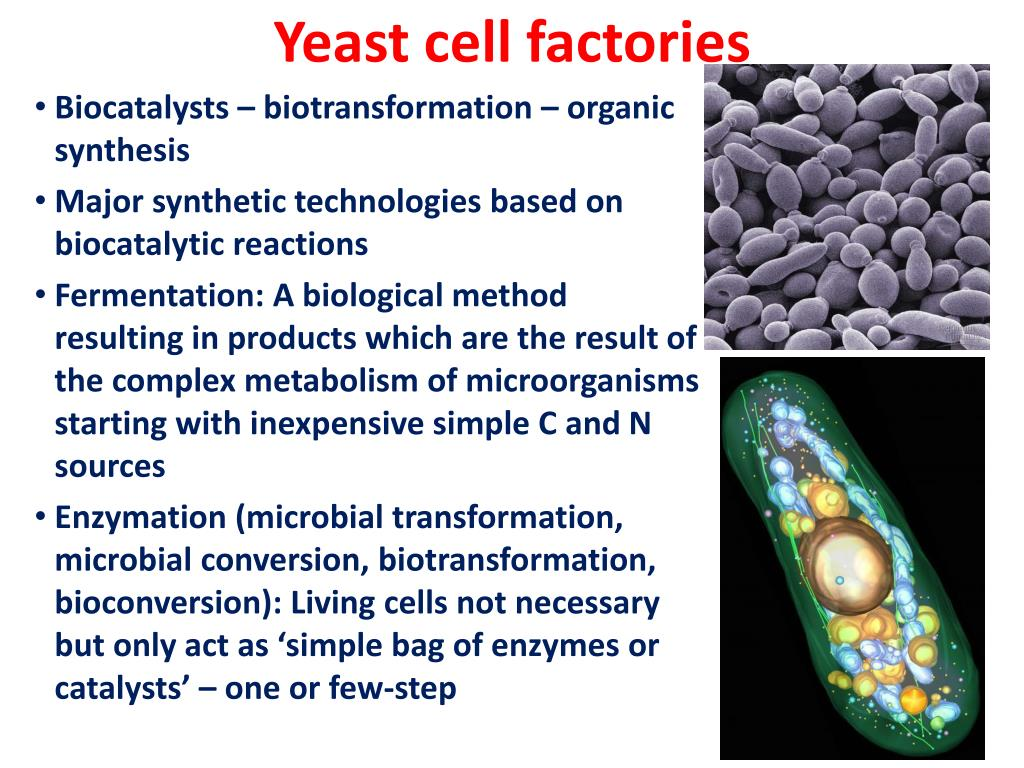 Yeast cell factories