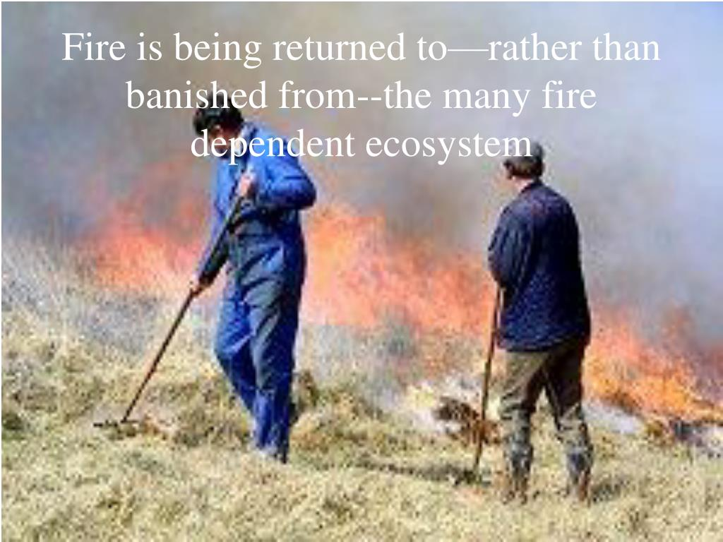 Fire is being returned to—rather than banished from--the many fire dependent ecosystem