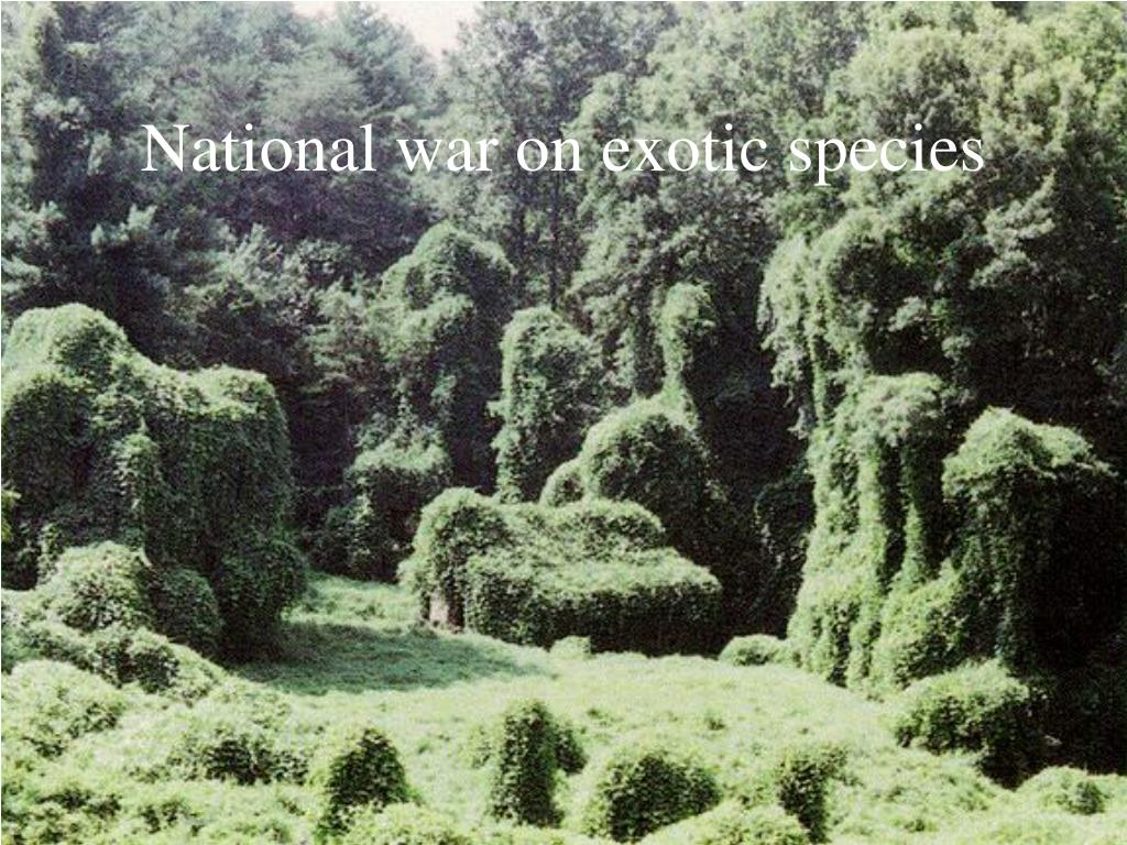 National war on exotic species