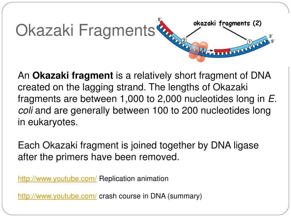 okazaki fragment