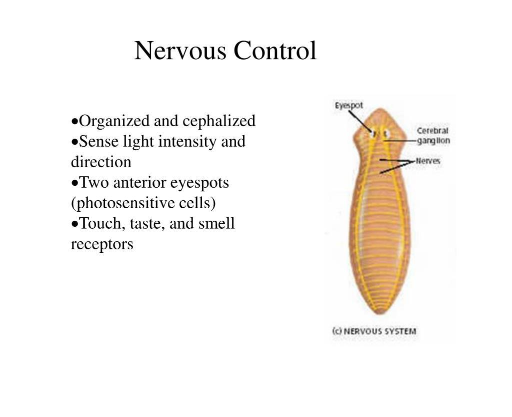 Nervous Control