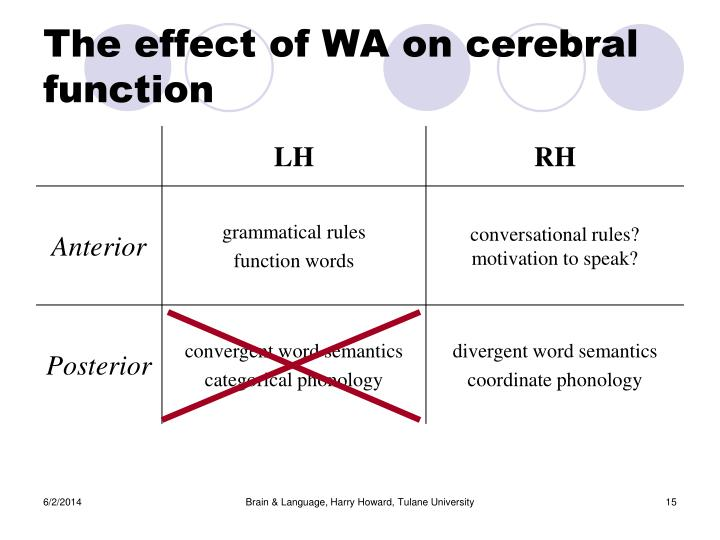 The effect of WA on cerebral function