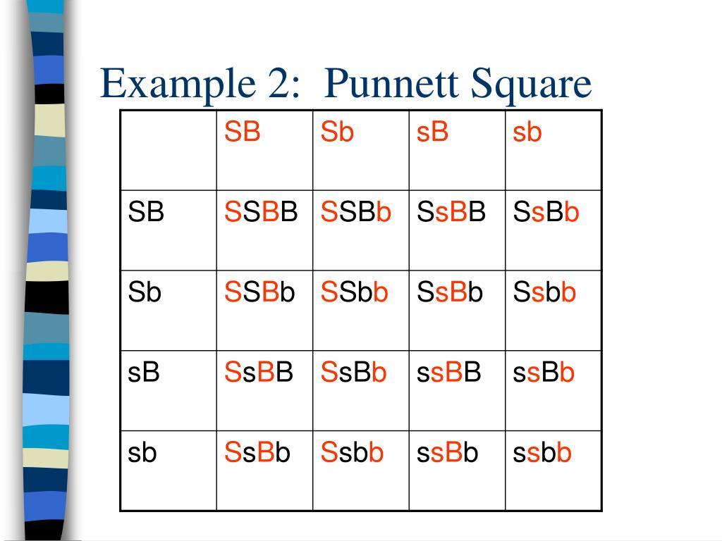 Example 2:  Punnett Square
