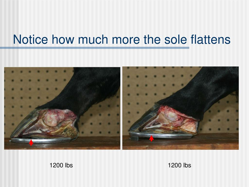 Notice how much more the sole flattens