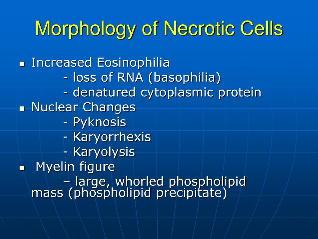 Morphology of Necrotic Cells
