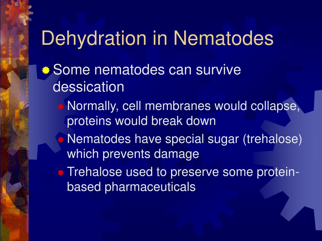 Dehydration in Nematodes