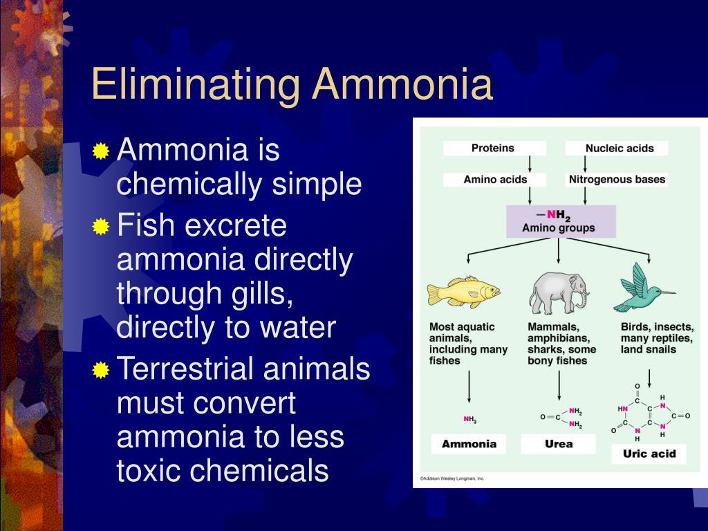 Eliminating Ammonia